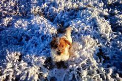 Zimowe Robinkowo